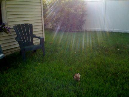 Rabbit-is-back