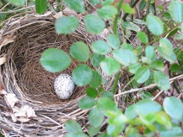 Nest-sm